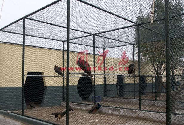 南通开沙岛动物园